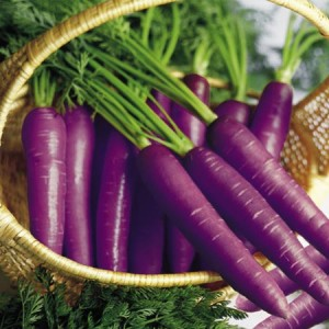 purple carrots jouce