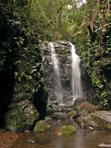 The Gondwana Rainforests of Australia. Part of the World Heritage listed Central Eastern Rainforest Reserves.