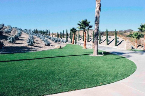 Maintaining Your Lawn During a Drought