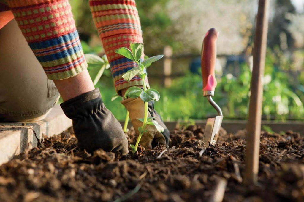 4 Tips for Winter Garden Preparation