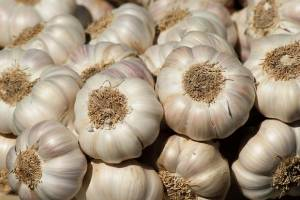 garlic can create an inhospitable environment for many insects