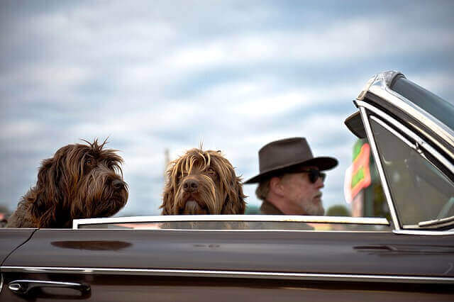 Here are 8 tips for safely travelling with your dog and 5 calm dog breeds that make great travel companions.