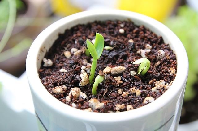 Organic gardening Pots