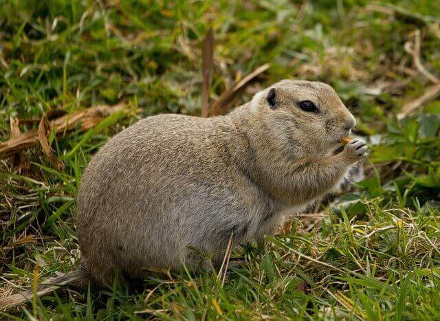 protect your Garden from Gophers