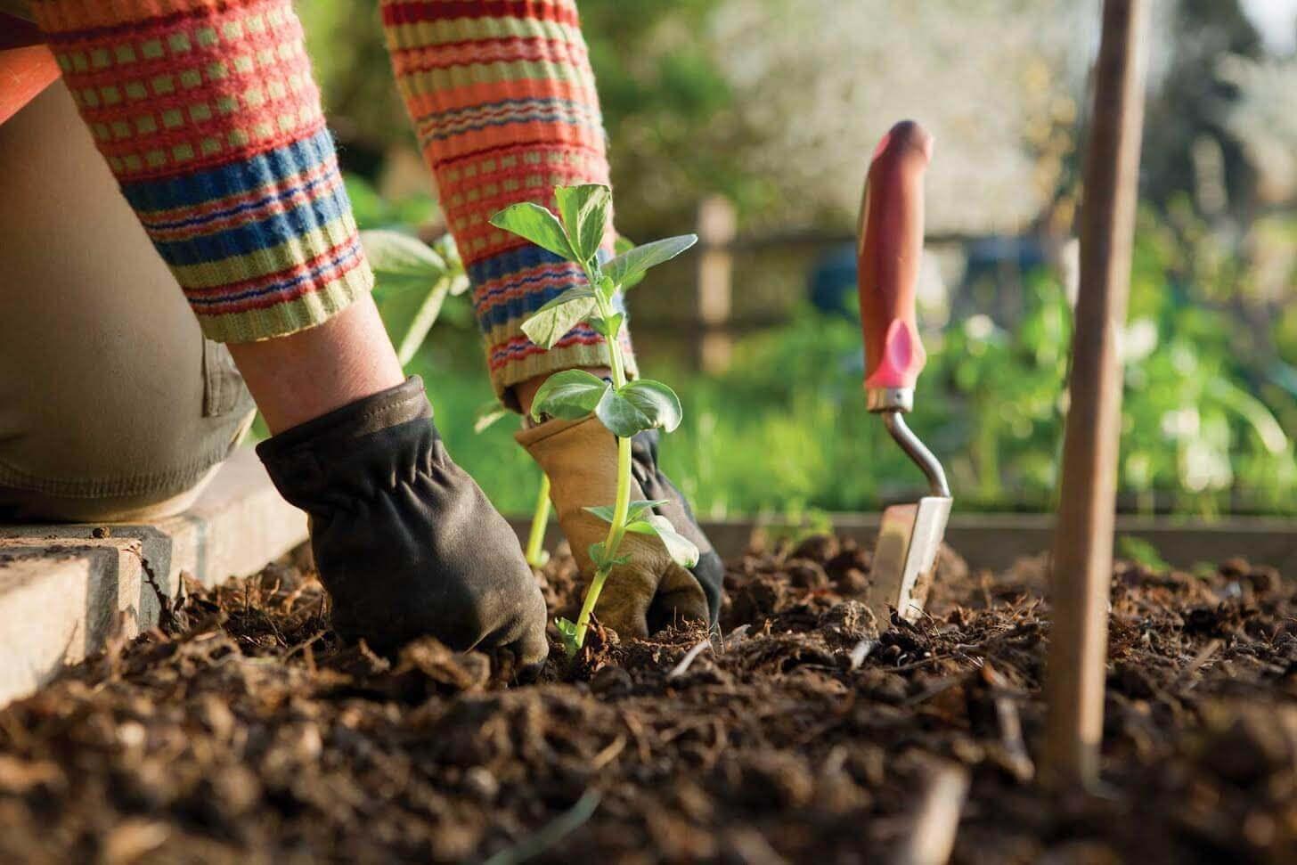 4 Tips for Winter Garden Preparation