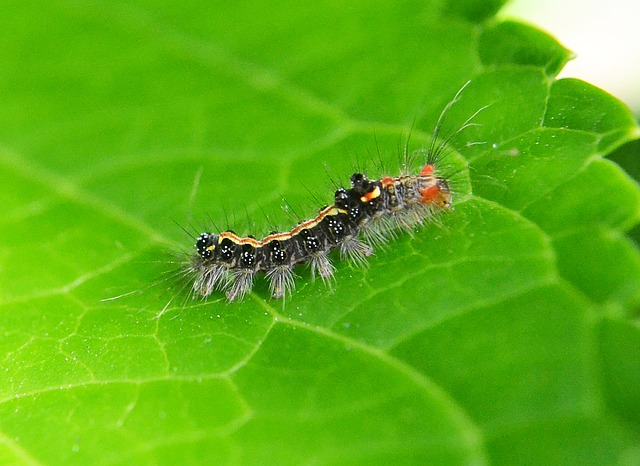 Organic pest control recipes can be practiced at home or in your organic garden.
