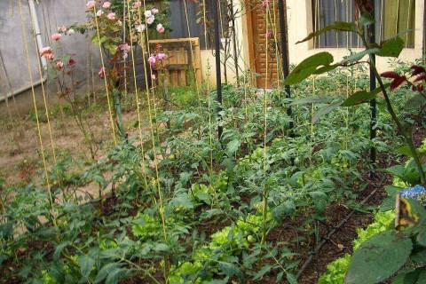 Useful tips to grow healthy foods at backyard for your family