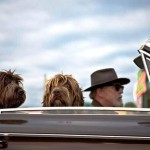 Traveling With Pet: Tips to Keep Everyone Stress - Free