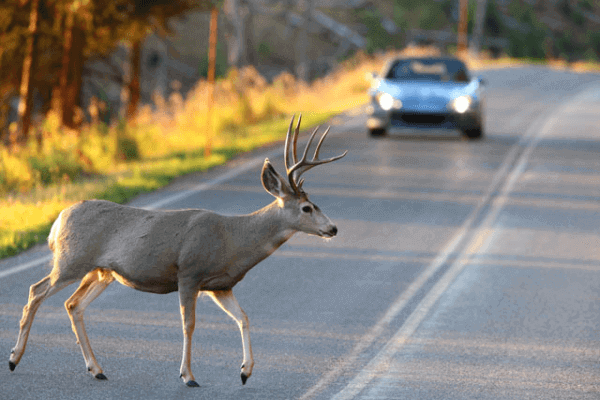 Sometimes, there will be wild animals that may potentially damage your car