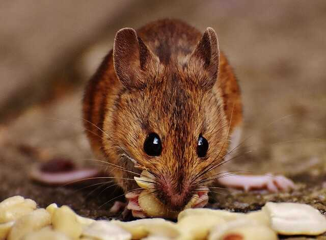 While searching for the best pest and rodent removal contractors near you,