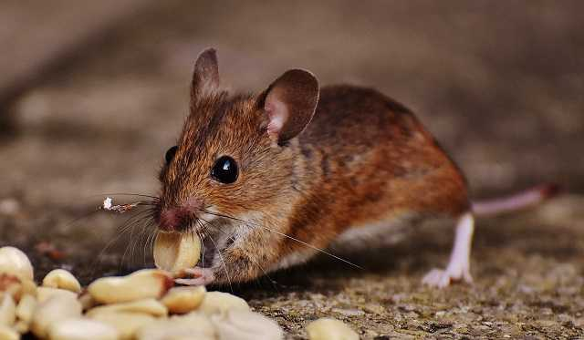 the best standpoints of recruiting the best pest and rodent removal services provider is the benefit of working