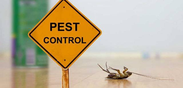 Most of the expert pest control services additionally offer preventive pest and rodent extermination measures
