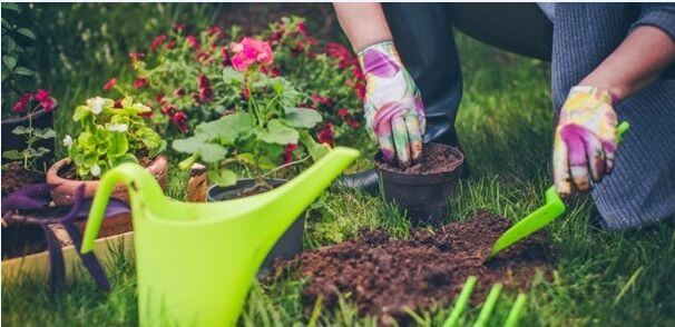 Get out in your garden and see how gardening banishes stresses of life
