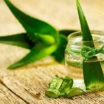 There are many varieties of Aloe Vera approximately 350 but around 4 of them have significant healing properties