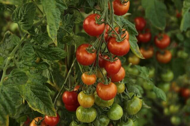 It´s fairly easy and straightforward when you start an organic vegetable gardening project