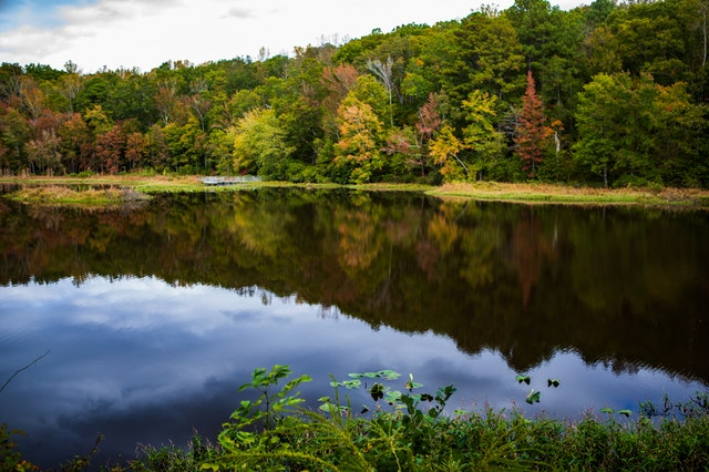 Natural beauties of Virginia, a river, and trees of different shades of green and yellow.